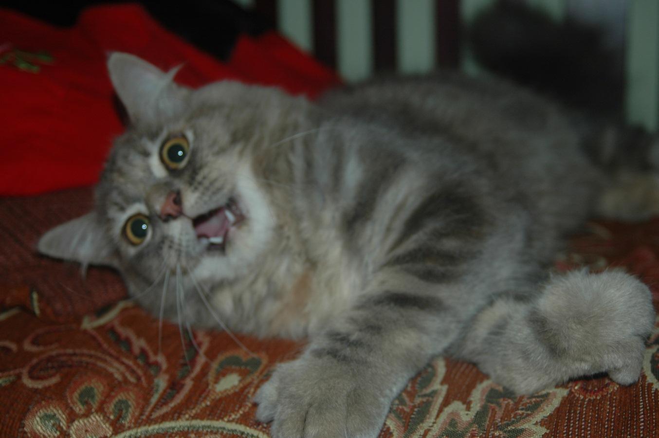 my little cat:3